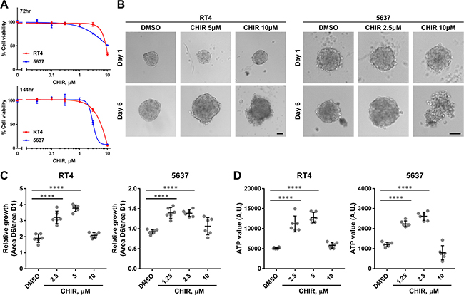 CHIR inhibits proliferation of bladder cancer cell lines in adherent culture but promotes proliferation in organoid culture.