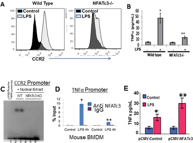 NFATc3 transcriptionally regulates CCR2 and TNFα expression.