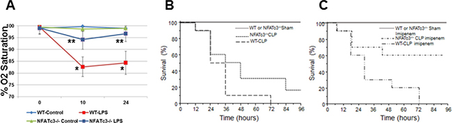 NFATc3–/– mice show improved arterial Oxygen saturation and survival compared to wild type mice.