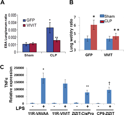 Pharmacological inhibition of NFAT attenuates pulmonary edema and inflammatory cytokines during sepsis-induced ALI.