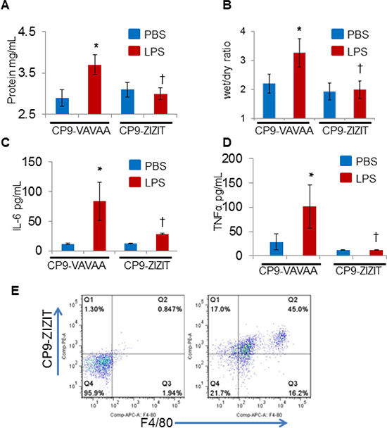 CP9-ZIZIT attenuates LPS induced pulmonary edema and cytokine storm in murine models of endotoxemia.