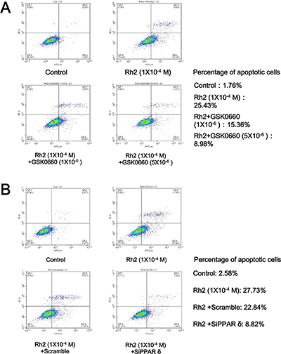 Flow cytometry showing GSK0660 and siRNA inhibition on Rh2 apoptotic effect.