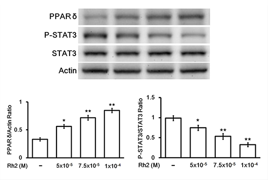 Western blot showing Rh2 effects on PPAR-delta and p-STAT3/STAT3 protein expression.