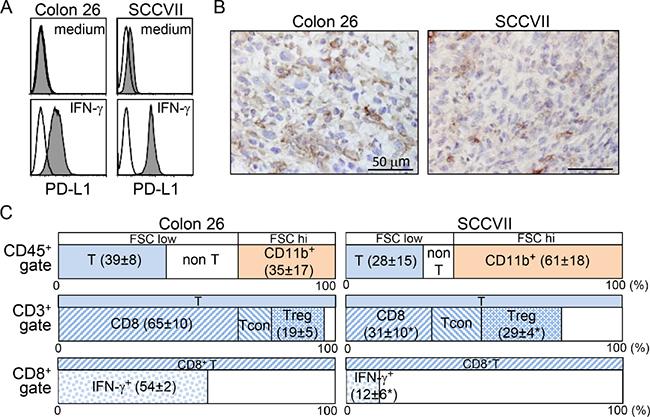 Colon 26 and SCCVII tumors exhibit distinct host immune responses in the TME.