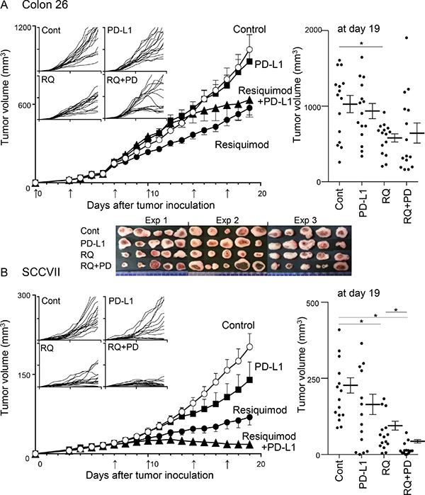 Effects of treatments with resiquimod and/or PD-L1 blockade in Colon 26 and SCCVII tumor models.