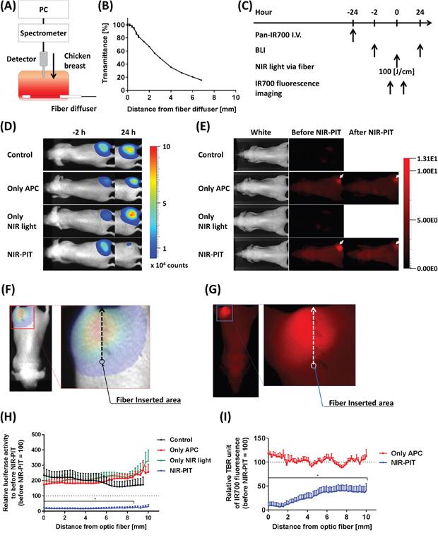 Estimation of effective NIR-PIT area using the fiber diffuser.
