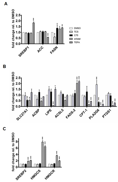 Inhibition of FA synthesis causes distinct effects on the expression of key genes involved in FA and cholesterol metabolism.