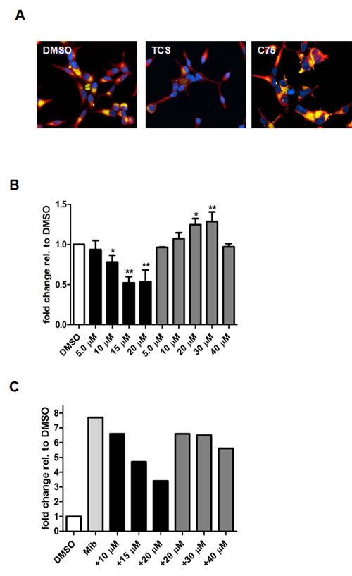 Triclosan reduces the lipid levels of LNCaP cells.