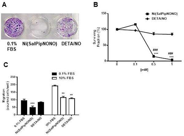 Ni(SalPipNONO) inhibits clonogenicity and invasiveness of A549 cells.