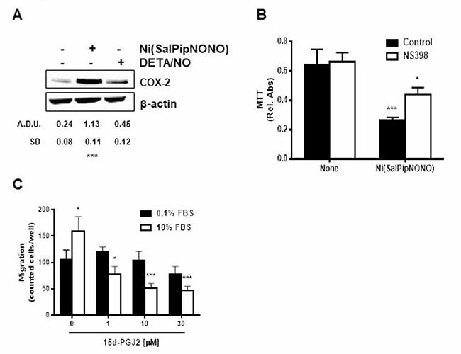 Ni(SalPipNONO) activates the COX-2 pathway.
