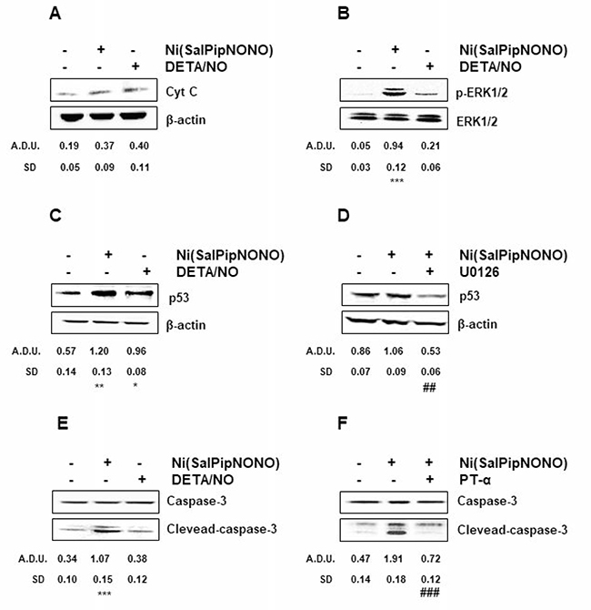 Ni(SalPipNONO) induces signaling related to apoptosis.