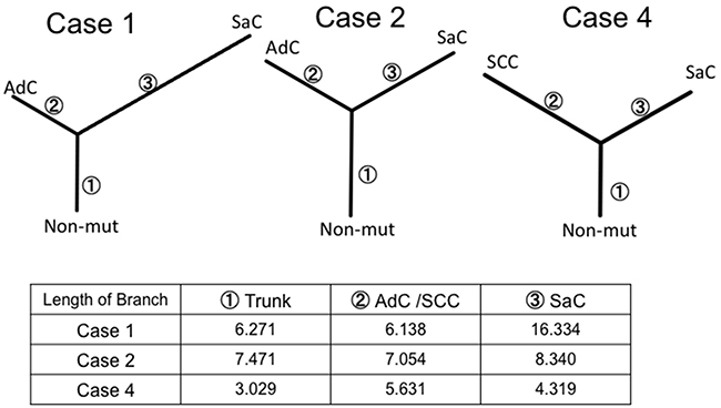 Phylogenetic analysis based on whole exome sequencing.