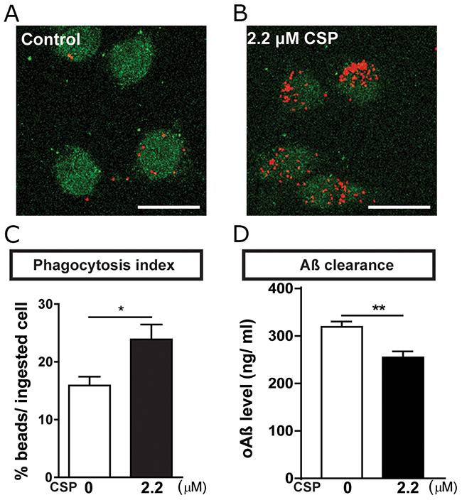 CSP increased phagocytosis of BV2 microglia.