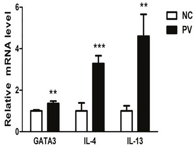 Relative expression of GATA3, IL-4, and IL-13 mRNA in CD4+ T cells from PV patients, measured by real-time quantitative RT-PCR and normalized to β-actin (p = 0.001, p < 0.001, p = 0.008, respectively).