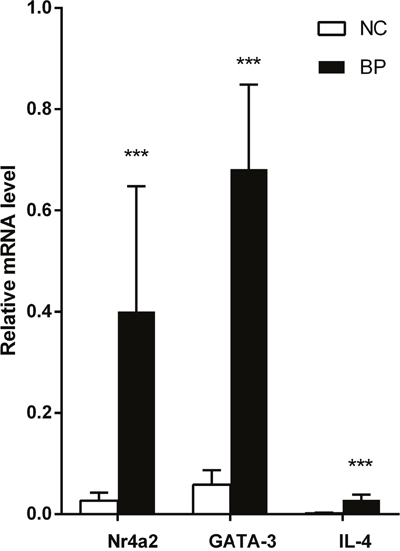 Relative expression of GATA3, nr4a2, and IL-4 mRNA in CD4+ T cells from BP patients, measured by real-time quantitative RT-PCR and normalized to β-actin (p <0.001, p < 0.001, p < 0.001, respectively).