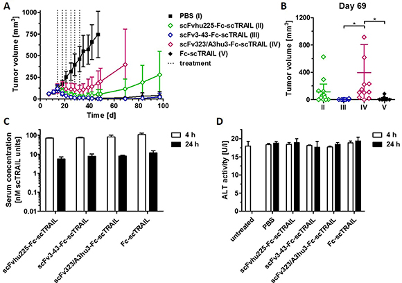 In vivo effects of scFv-Fc-scTRAIL molecules and Fc-scTRAIL.