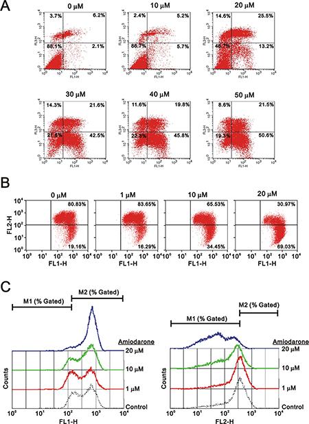 Amiodarone triggered intrinsic apoptosis.
