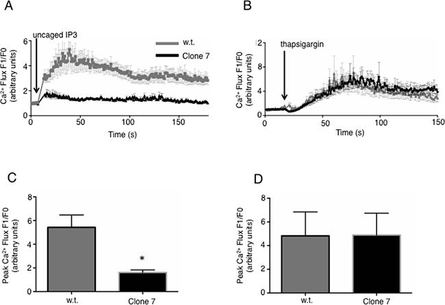 IP3R-dependent Ca2+ flux is reduced in SELENOK deficient melanoma cells.