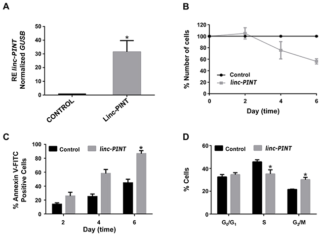 Overexpression of linc-PINT decreases MOLT-4 cell proliferation through apoptosis activation and cell cycle arrest at G2/M phase.