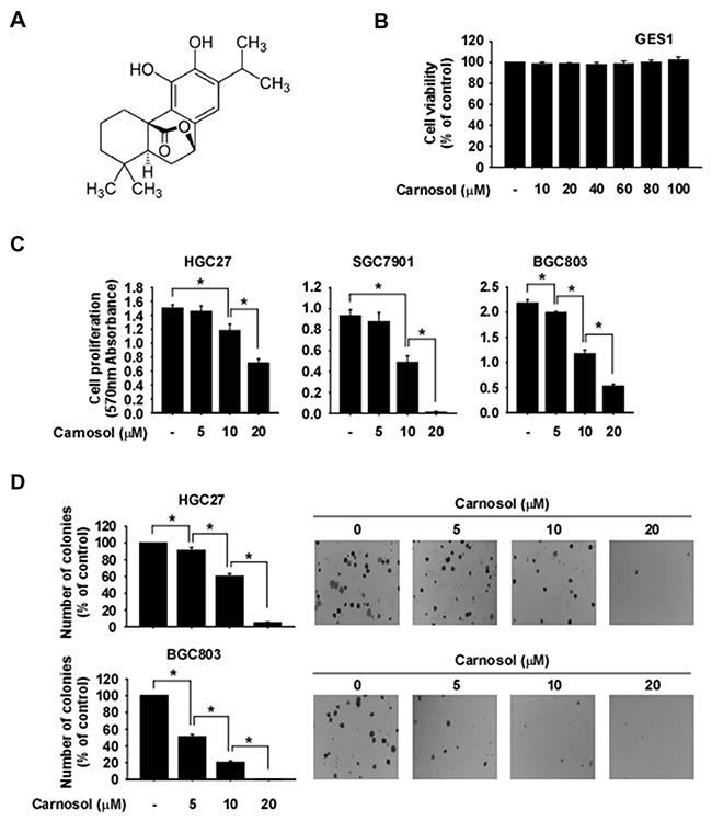 Anti-cancer effects of carnosol.
