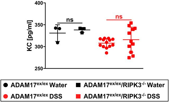 Effect of chronic colitis on KC serum levels in ADAM17ex/ex and ADAM17ex/ex/RIPK3-/- mice.