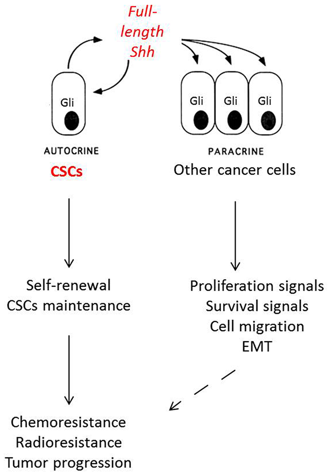 Mechanisms of Shh activation in non-small cell lung cancer.