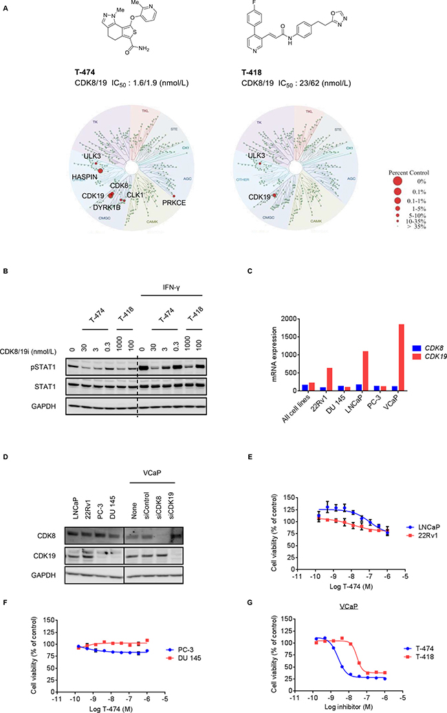 Anti-proliferative activity of CDK8/19 inhibitors in prostate cancer cells.