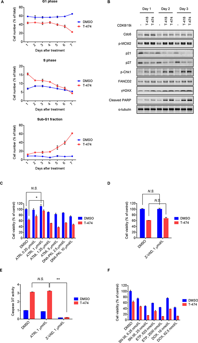 Induction of DNA damage response followed by ATR-dependent cell death mediated by CDK8/19 inhibition.