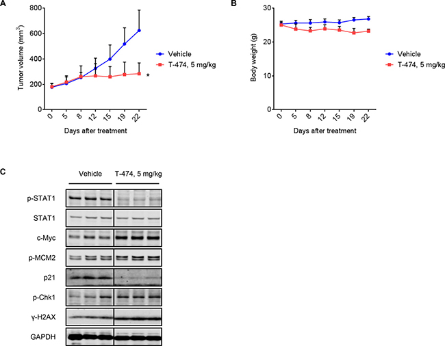 In vivo antitumor activity of CDK8/19 inhibition.