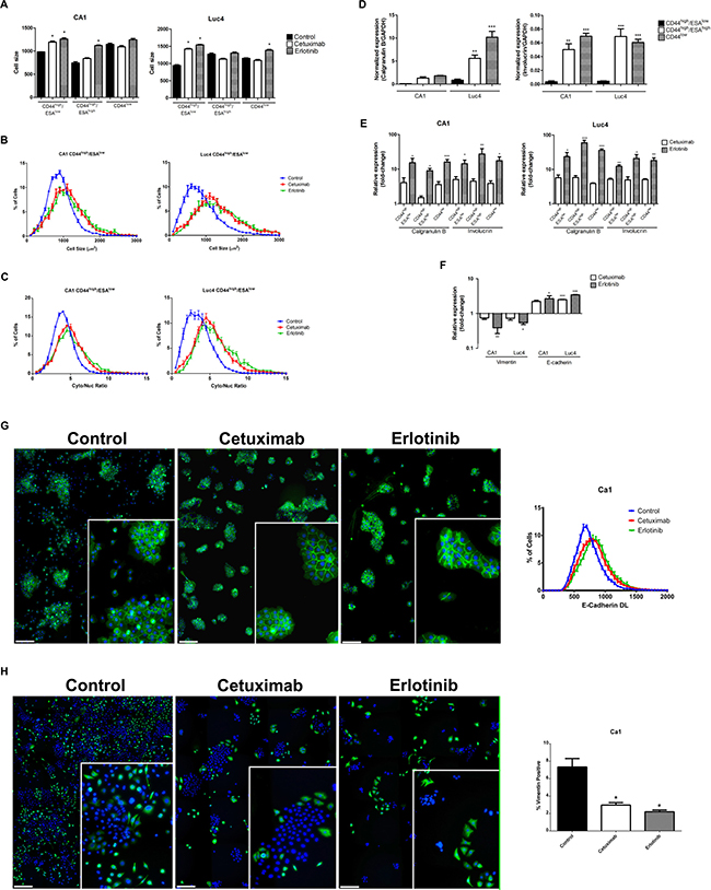 Cetuximab and Erlotinib induce cellular differentiation.