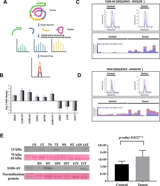 MRM and immunoblotting based validation of the top dysregulated proteins identified in the present study.