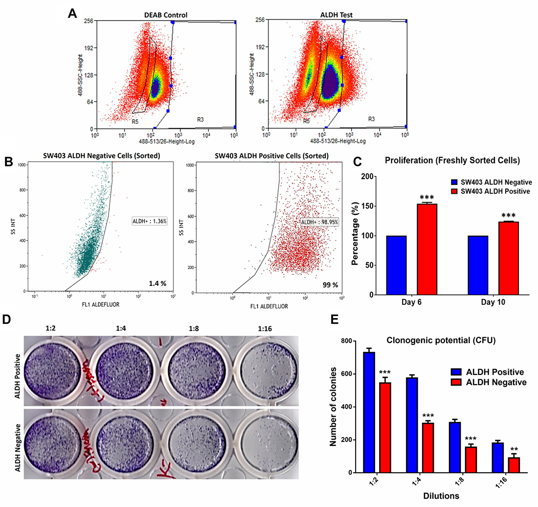 Proliferation and clonogenic potential of colorectal cancer ALDH+ cells.