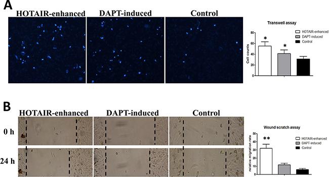 Notch inhibition neutralizes the high invasive status of malignantly transformed LNSCs.