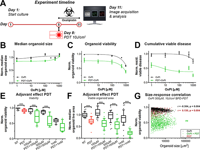 Comparison of immediate dose response effects of OxPt as a single therapy (black, same as Figure 2) or with neoadjuvant PDT (green) on AsPC-1 organoid cultures.