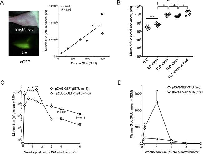 Intramuscular reporter gene transfer in BALB/c mice.
