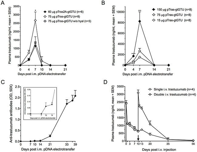 Trastuzumab gene transfer and trastuzumab protein administration in BALB/c mice.