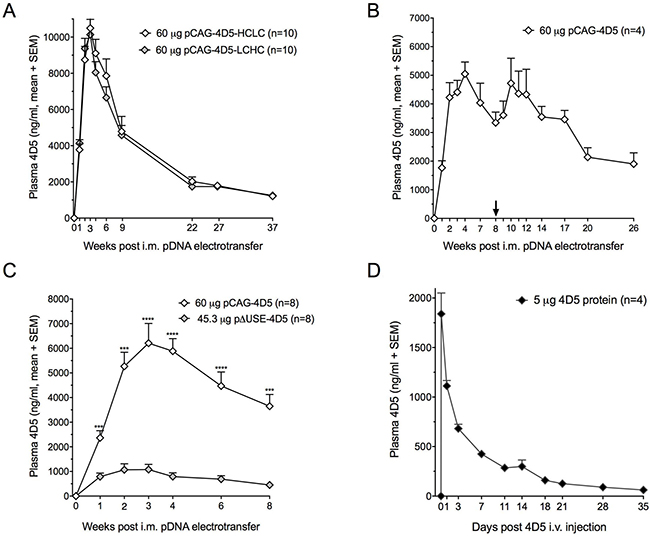 4D5 gene transfer and 4D5 protein administration in BALB/c mice.