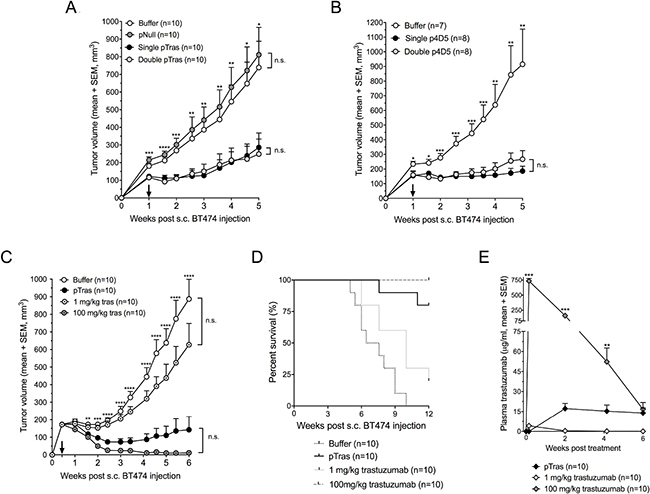 Efficacy and pharmacokinetics of DNA-based anti-HER2 antibodies in a mouse breast cancer model.