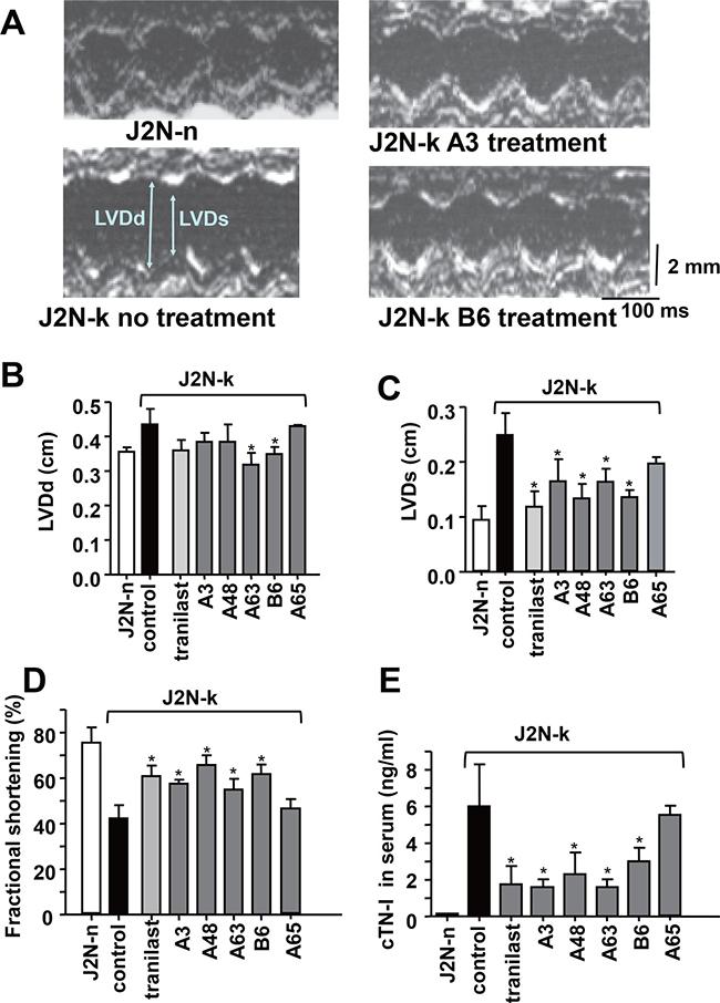 Protective effects of TRPV2 inhibitors against cardiac dysfunction in J2N-k hamsters.