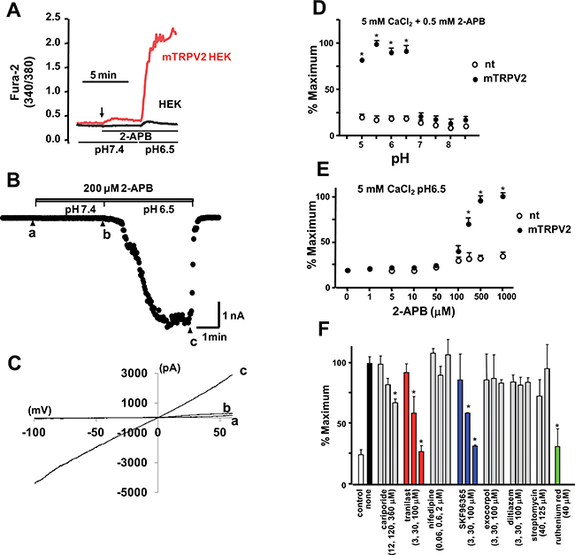Effects of extracellular pH and 2-APB on Ca2+ response and TRPV2 channel activity in HEK293 cells expressing TRPV2.