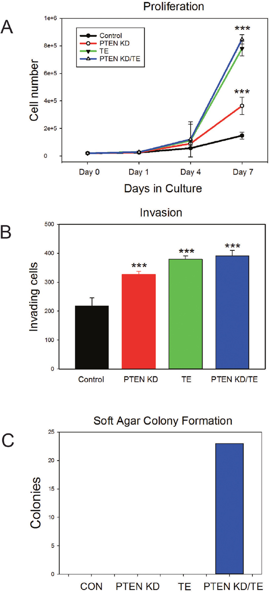 In vitro characterization of PNT1A cell lines with PTEN knockdown, TMPRSS2/ERG fusion gene expression or both alterations.