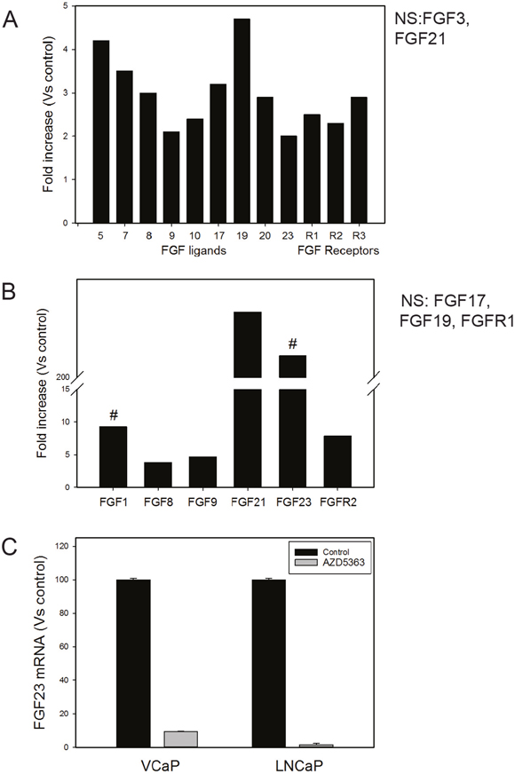 Decreased PTEN increases expression of FGF ligands and FGF receptors.