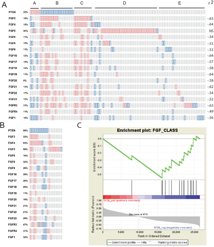 Correlation of loss of PTEN expression with increased FGFs and FGF receptors.