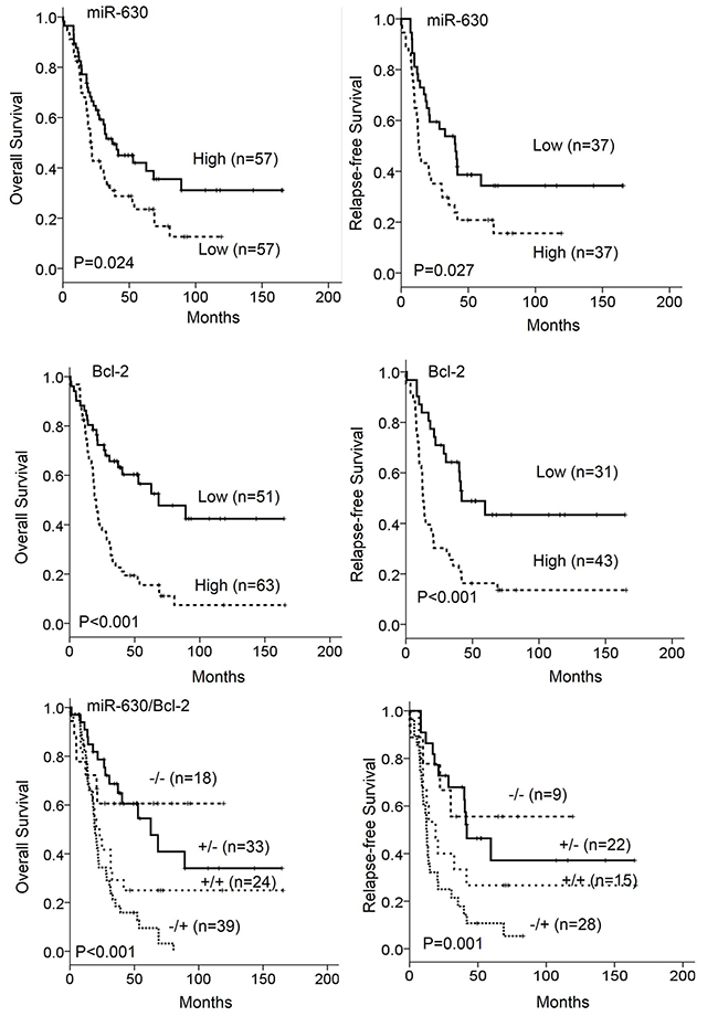 The expression of miR-630 and Bcl-2 in tumors was associated with overall survival (OS) and relapse free survival (RFS) in patients with lung cancer.