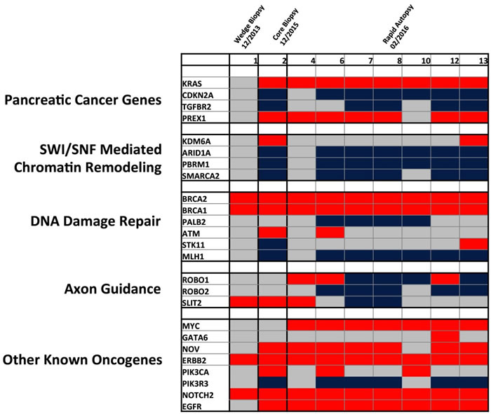Heatmap of detected copy number variations detected across tissue samples.