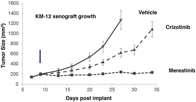 Anti-tumor activity of merestinib in KM-12-derived xenograft tumors.