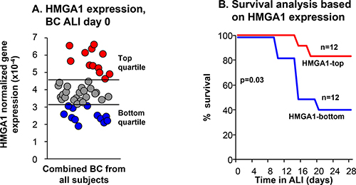 Relationship of BC expression of HMGA1 to the ability of SAE BC to differentiate.