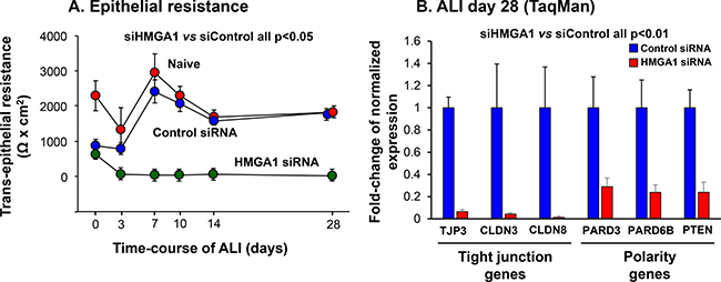 Consequences of HMGA1 down-regulation on airway epithelial barrier formation and barrier-related gene expression.