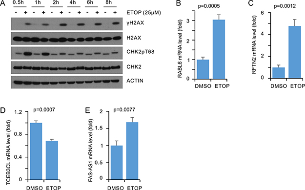 Real-time PCR analysis of DEGs in ETOP treated T47D cells.