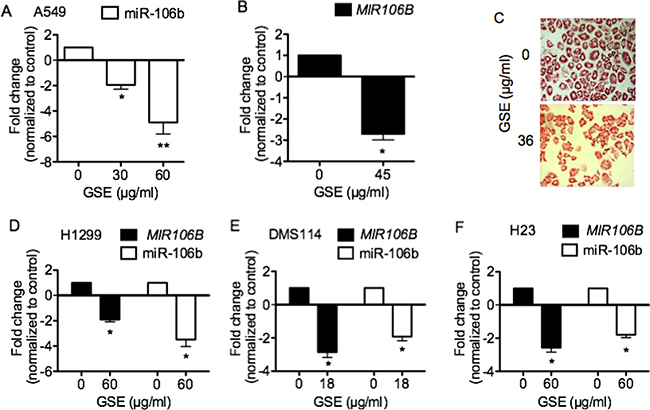 GSE significantly down-regulated oncomir miR-106b expression, and its precursor MIR106B mRNA expression in lung neoplastic cells.